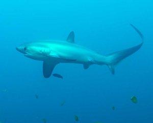 Dive Philippines Malapascua