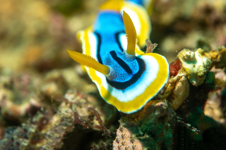 Dive Philippines
