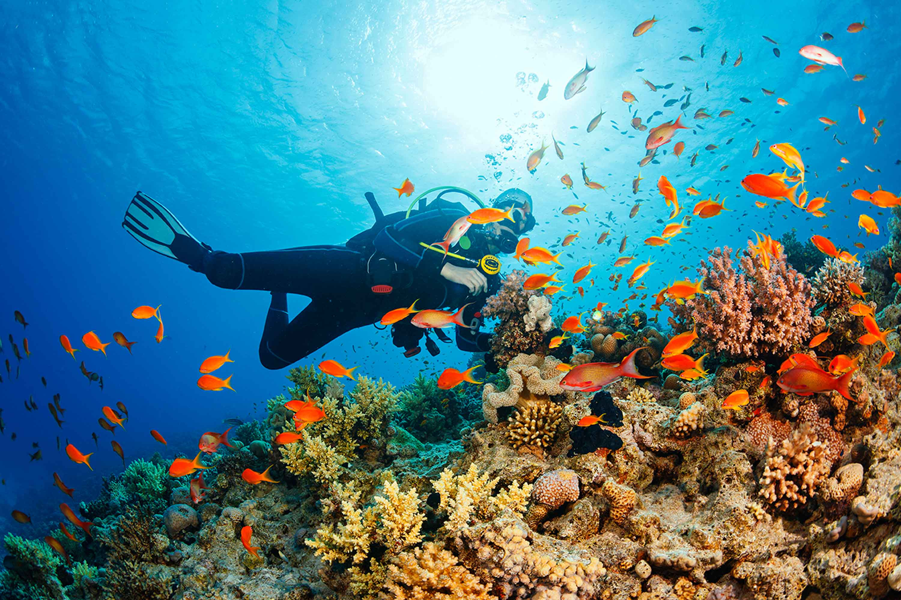 Dive holidays with travel&co