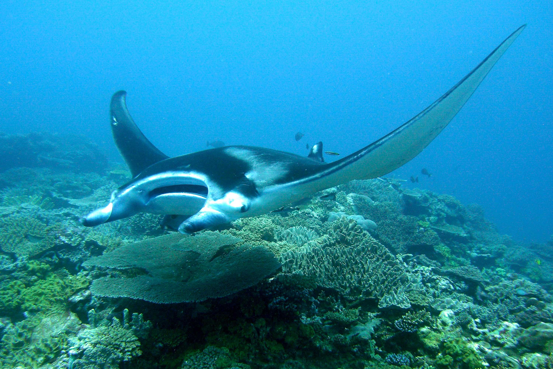 Dive Kadavu Island Fiji