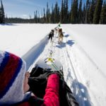 Dog Sledding in Sun Peaks