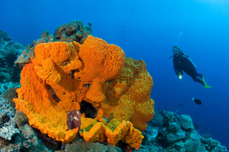 Papua New Guinea Diving Holidays