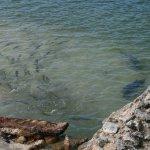 Fish in CXI