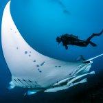 Dive Tahiti Fakarava