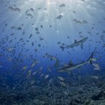Dive Tahiti Fakrava