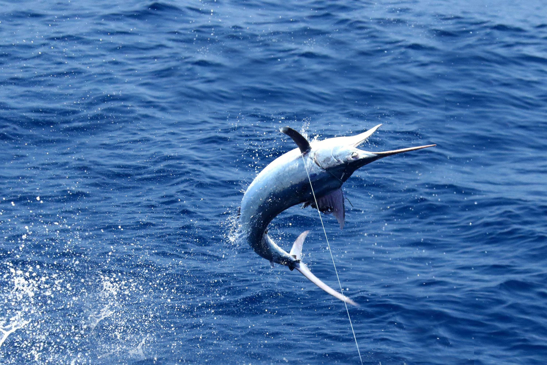 Fish Exmouth Western Australia