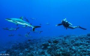 Dive Tahiti Rangiroa