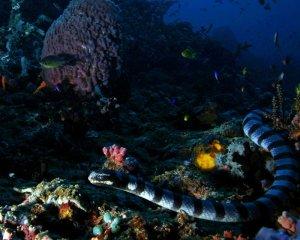 Dive Philippines Dumaguete