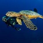 sea-turtle-yap