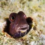 macro-diving-yap