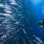 Dive holiday to Cocos Island Costa Rica