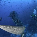 Dive holiday on a liveaboard to Cocos Island Costa Rica