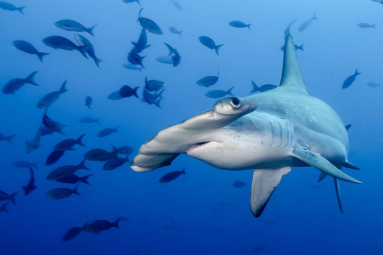 Dive Holiday in Cocos Island Costa Rica