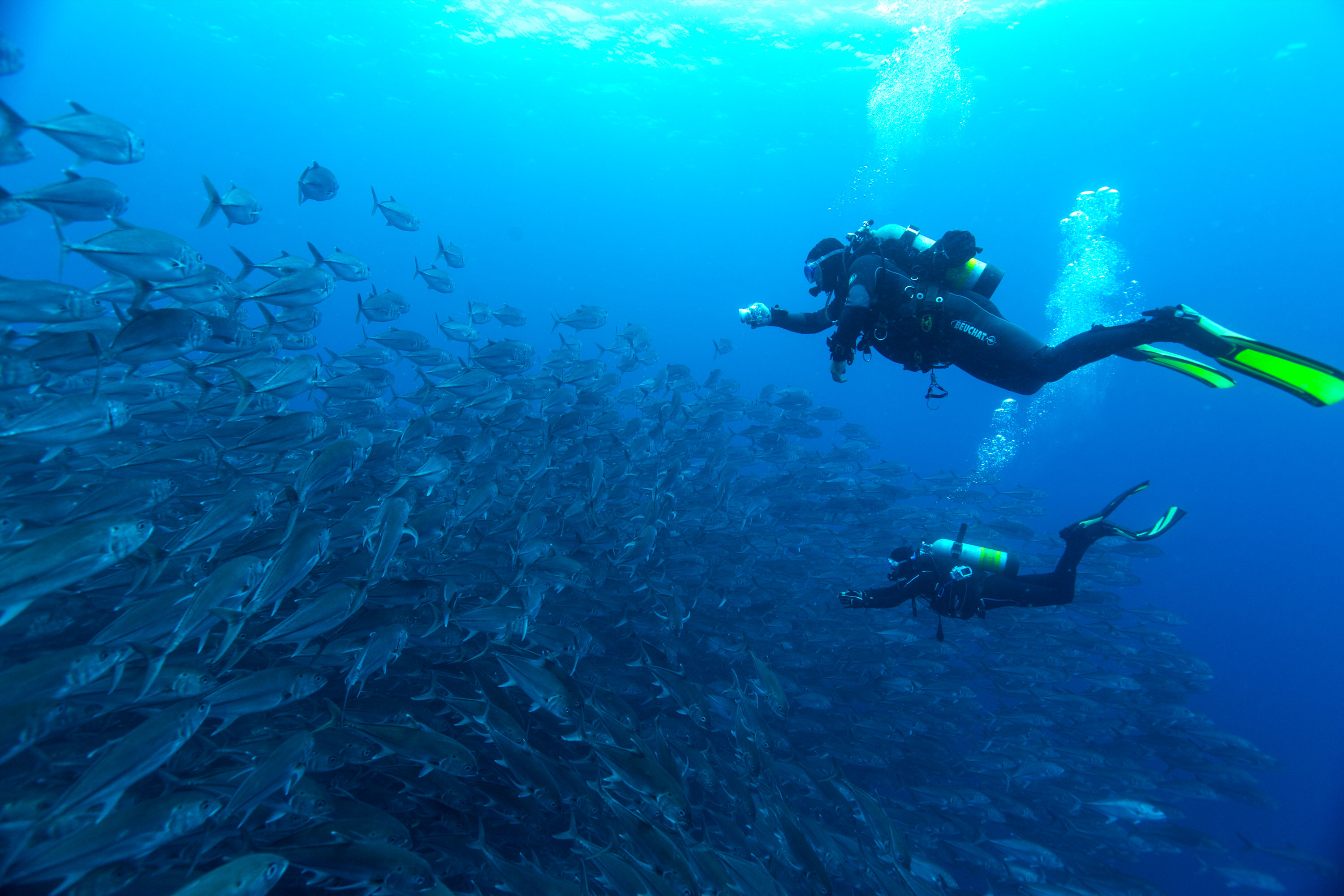 Diving Holiday to Cocos Island Costa Rica