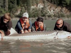 Fraser River Fishing for Sturgeon Chilliwack Canada