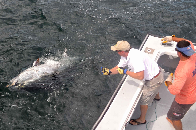 Fish Prince Edward Island Canada