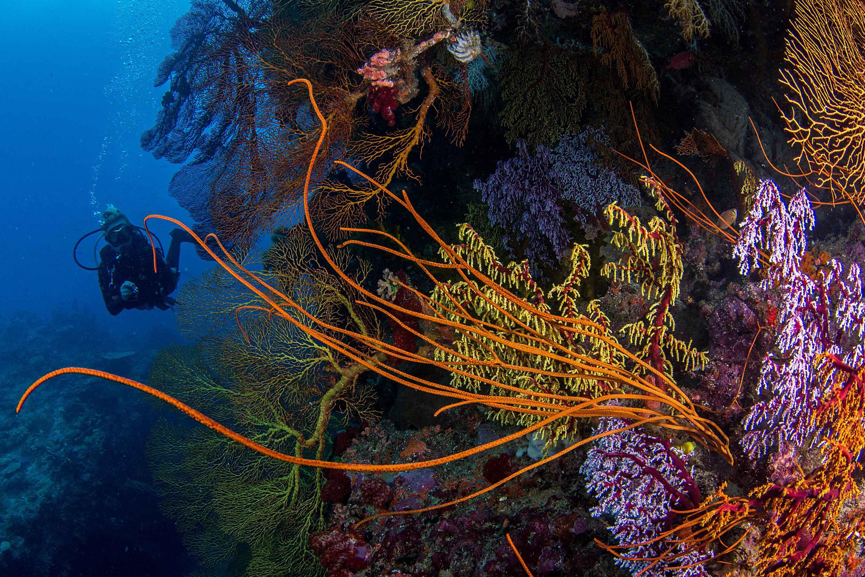 Dive Fiji Holidays