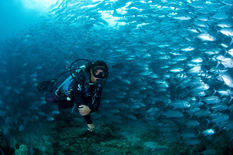 Dive holiday to Sipadan in Malaysia
