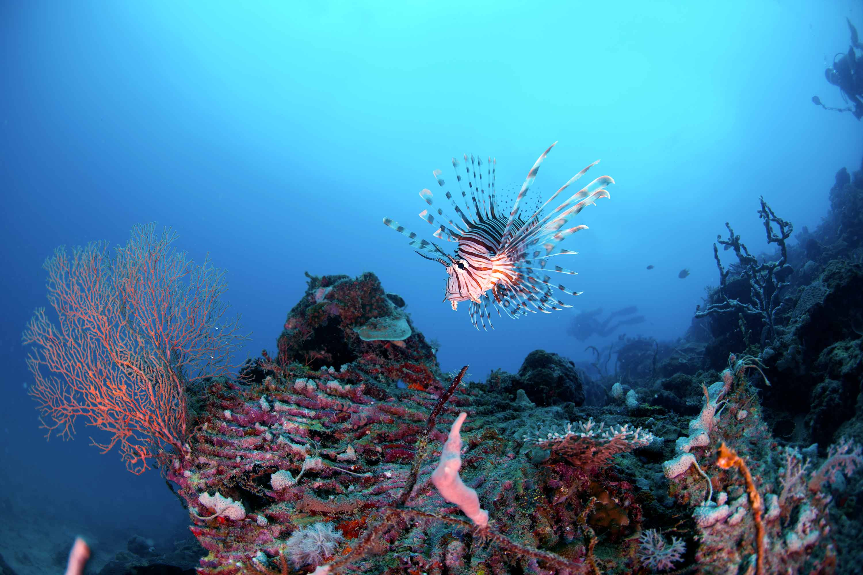 Dive holiday to Lankayan in Malaysia