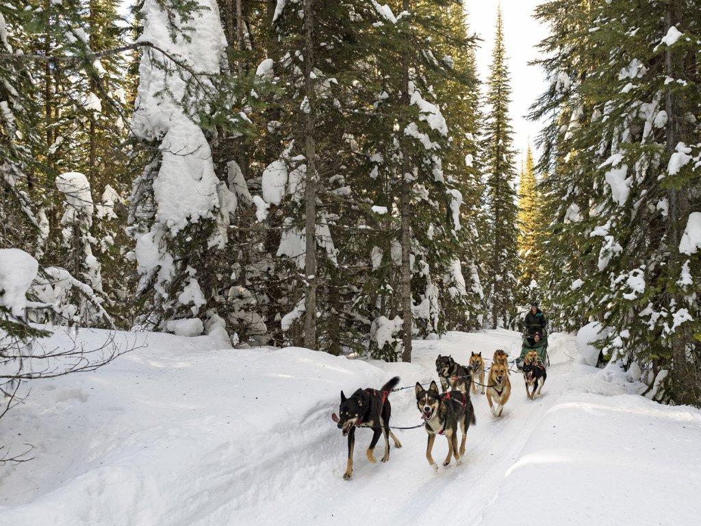 Dog Sledding Sun Peaks